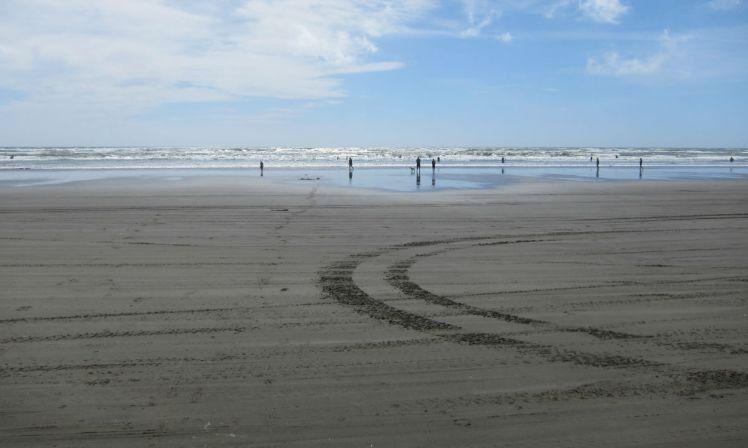 NZ Summer 3