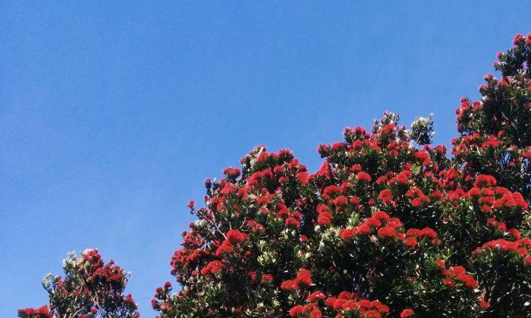 NZ Summer 5