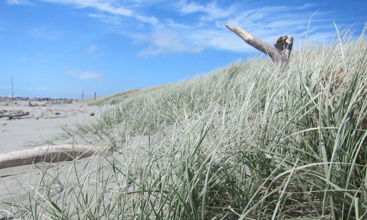 NZ Summer1