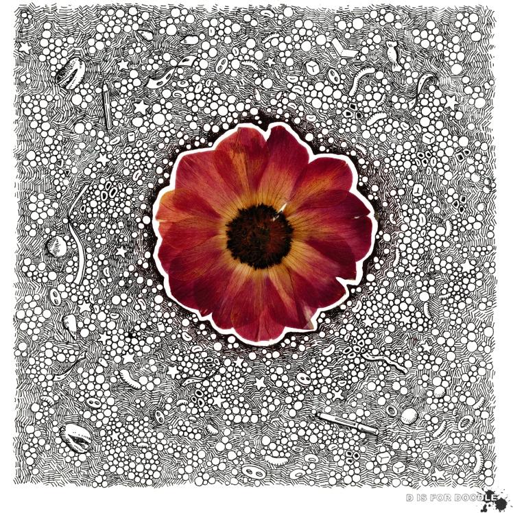 flora-anemone