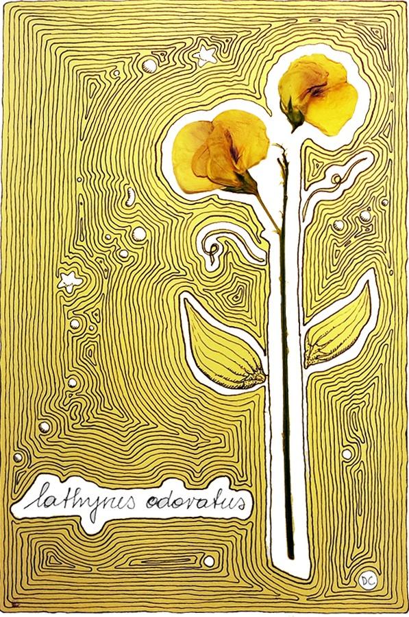 flora-lathus-odoratus-1